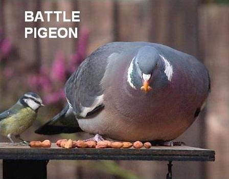 battle pigeon