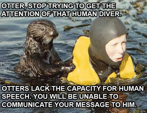 otter stop trying to get the attention of that human diver