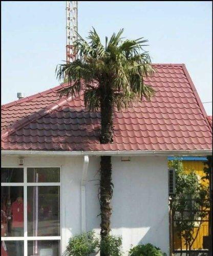 Palm Tree Roof Hole