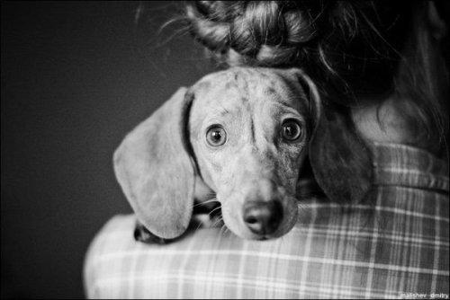 Shocked Doggy
