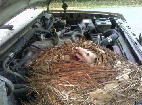 Engine Nest