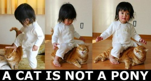 a cat is not a pony