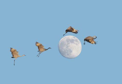 birdsandmoon