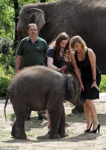 elephant nose goes up skirt