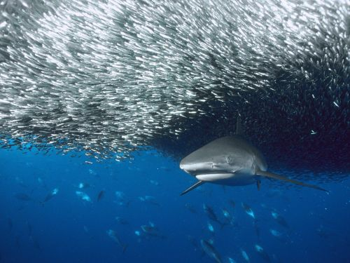 shark under fish cloud