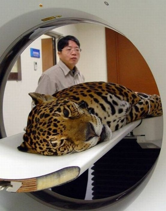 a real cat scan