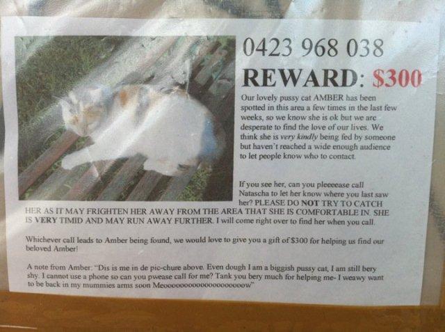stupid cat reward