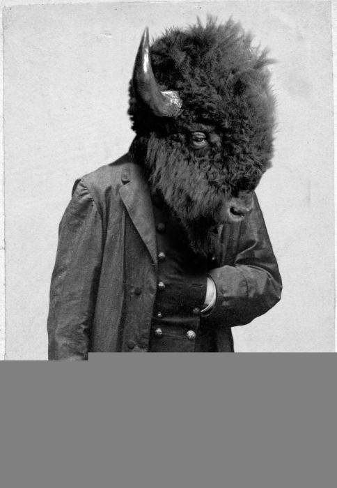 general bison