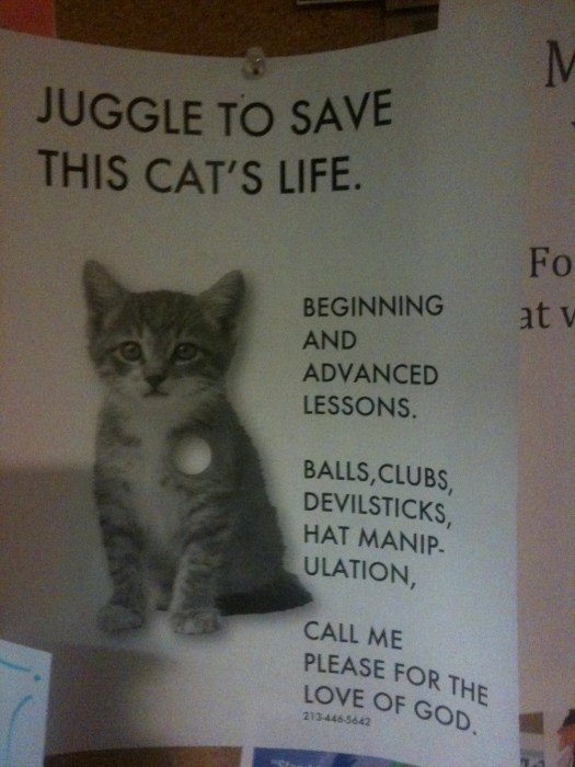 juggle to save this cats life