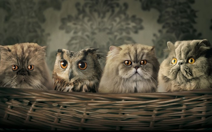 owl cats