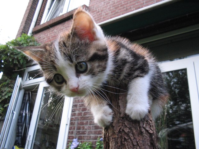 tree stump cat pole sitter