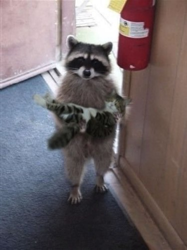 I found your lost cat