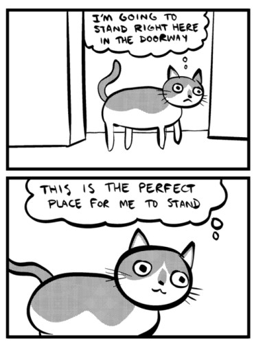 cat - perfect place