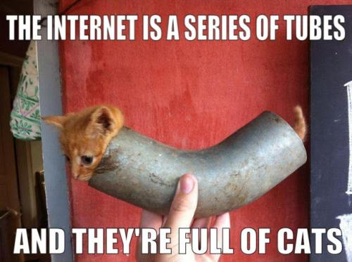 the internet is a series of tubes and they are full of cats