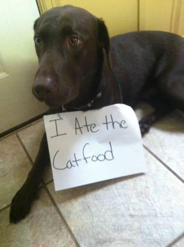 I ate the cat food