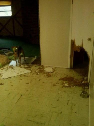 dog escape