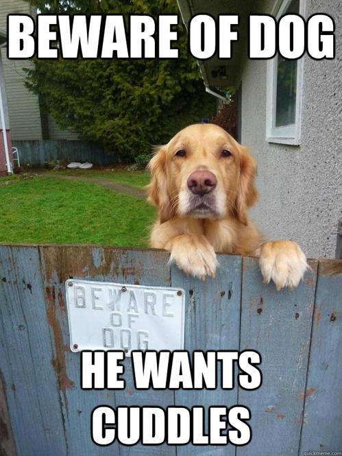 beware of dog - he wants cuddles.jpg