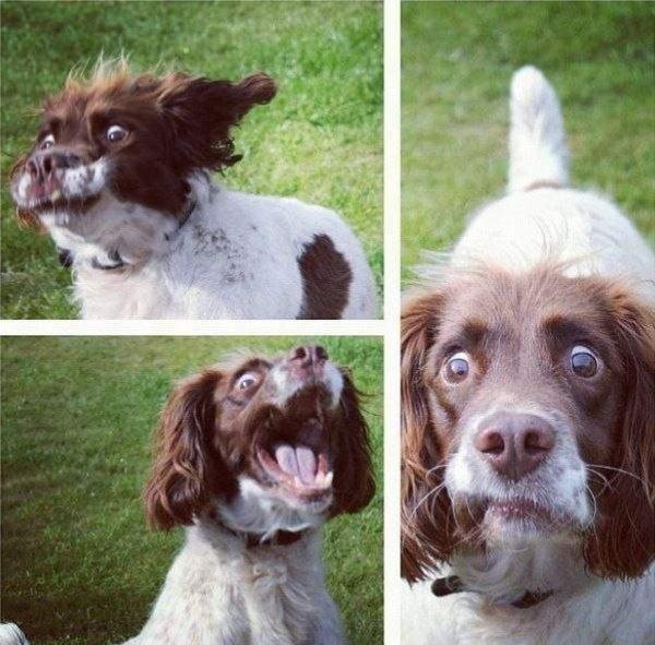 crazy dog face.jpg
