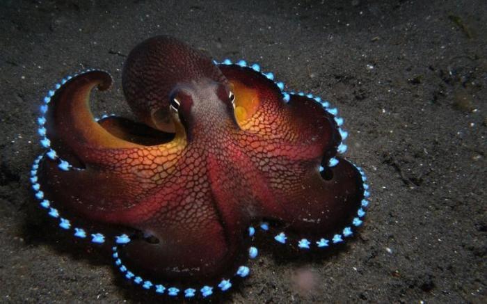 light up octopus.jpg