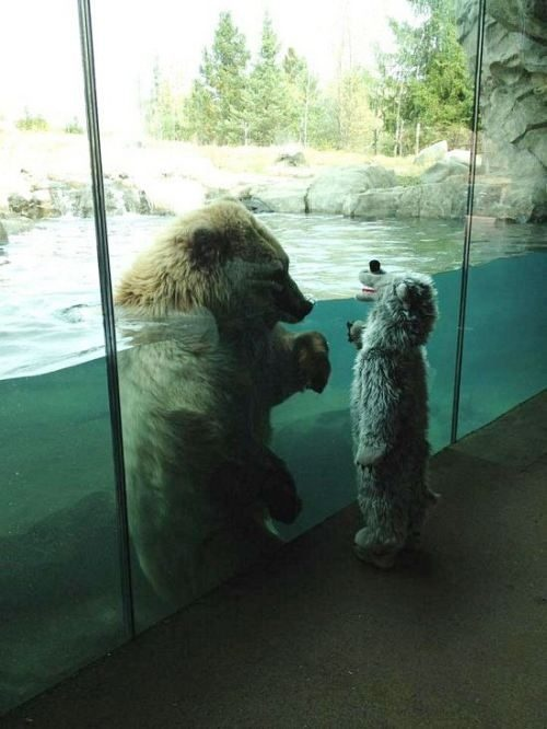 polar bear vs polar bear kid.jpg