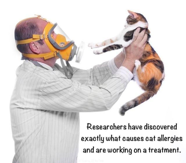 gasmask cat.jpg