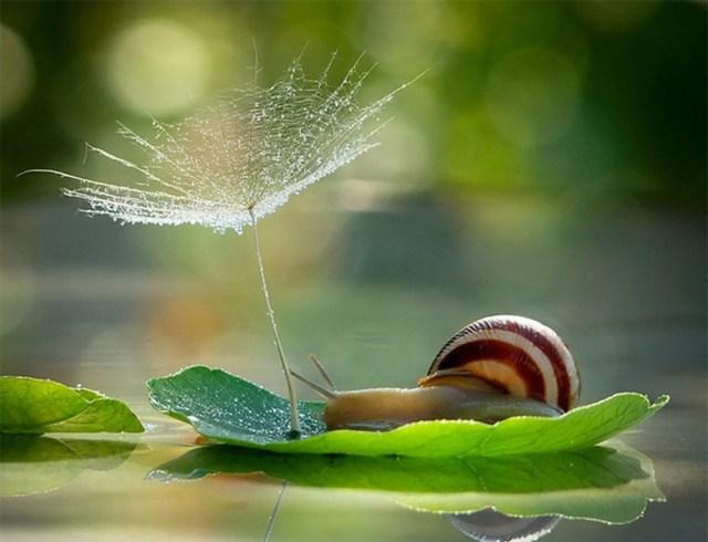 snail paradise.jpg