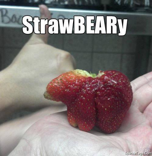 strawbeary.jpg