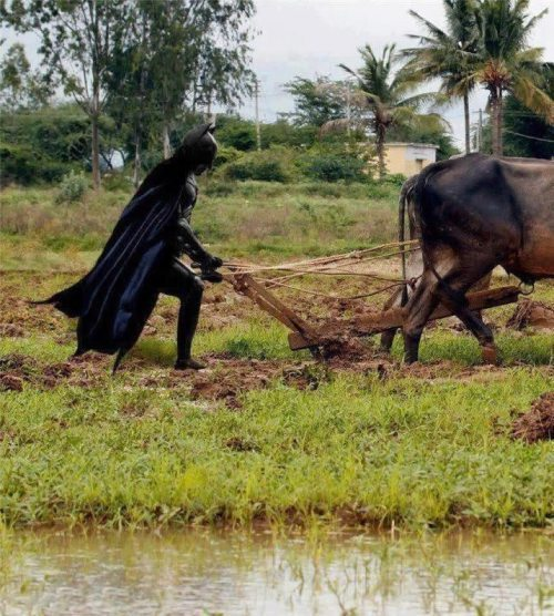 Batman farmer.jpg