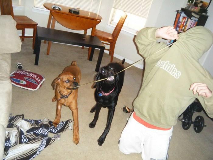 Dog fight.jpg