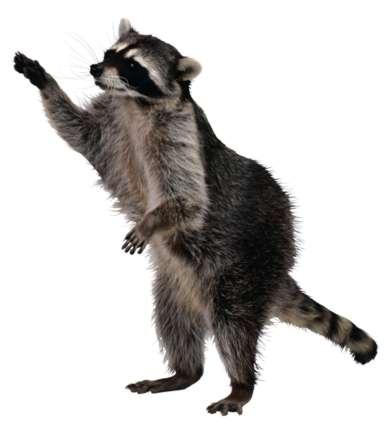 Squirrel Racoon.jpg