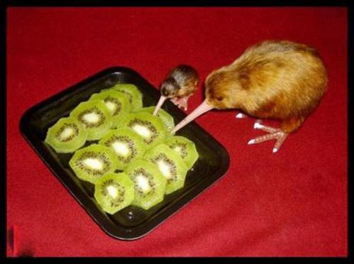 Cannibalism.jpg