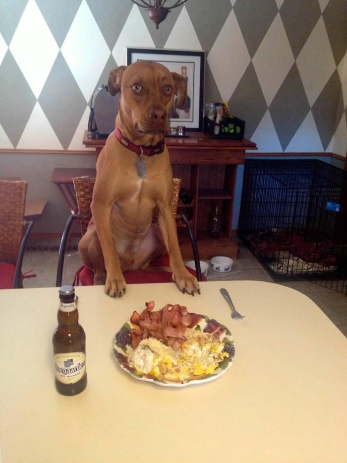 Dinner Dog.jpg