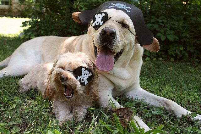 Pirate Dogs.jpg