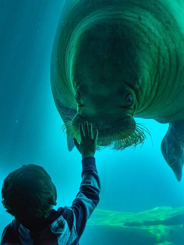 walrus and kid.jpg