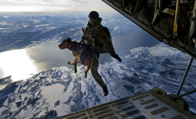Austrian Jagdkommando dropping from 10,000 ft with an explosives sniffing dog in Norway.jpg