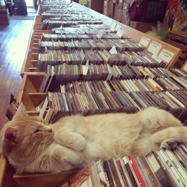 kitty music.jpeg