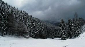 Snow Capped Forest