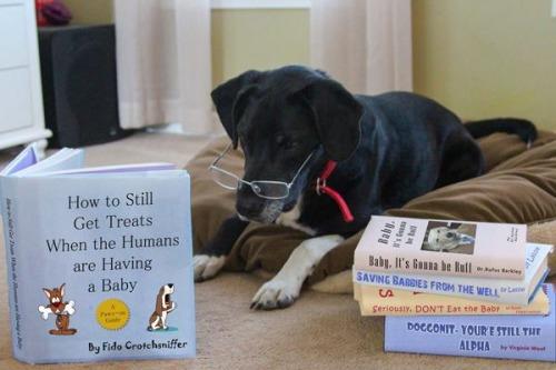 doggy baby expectations.jpg