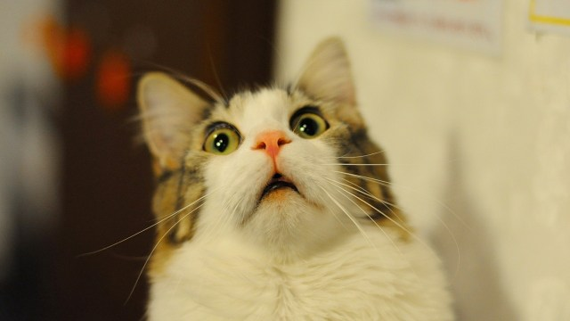 shocked cat.jpg