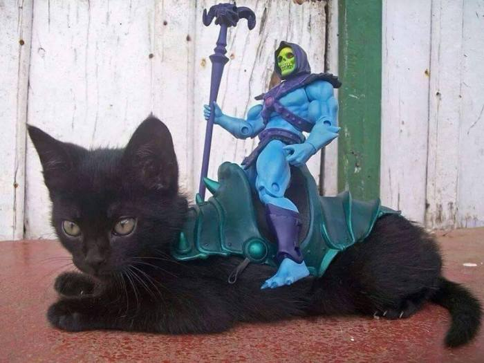 skeletor kitten mount.jpg