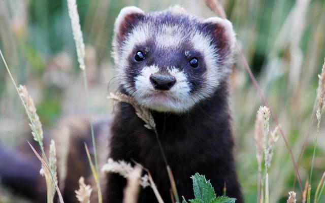 Cute Weasel.jpg