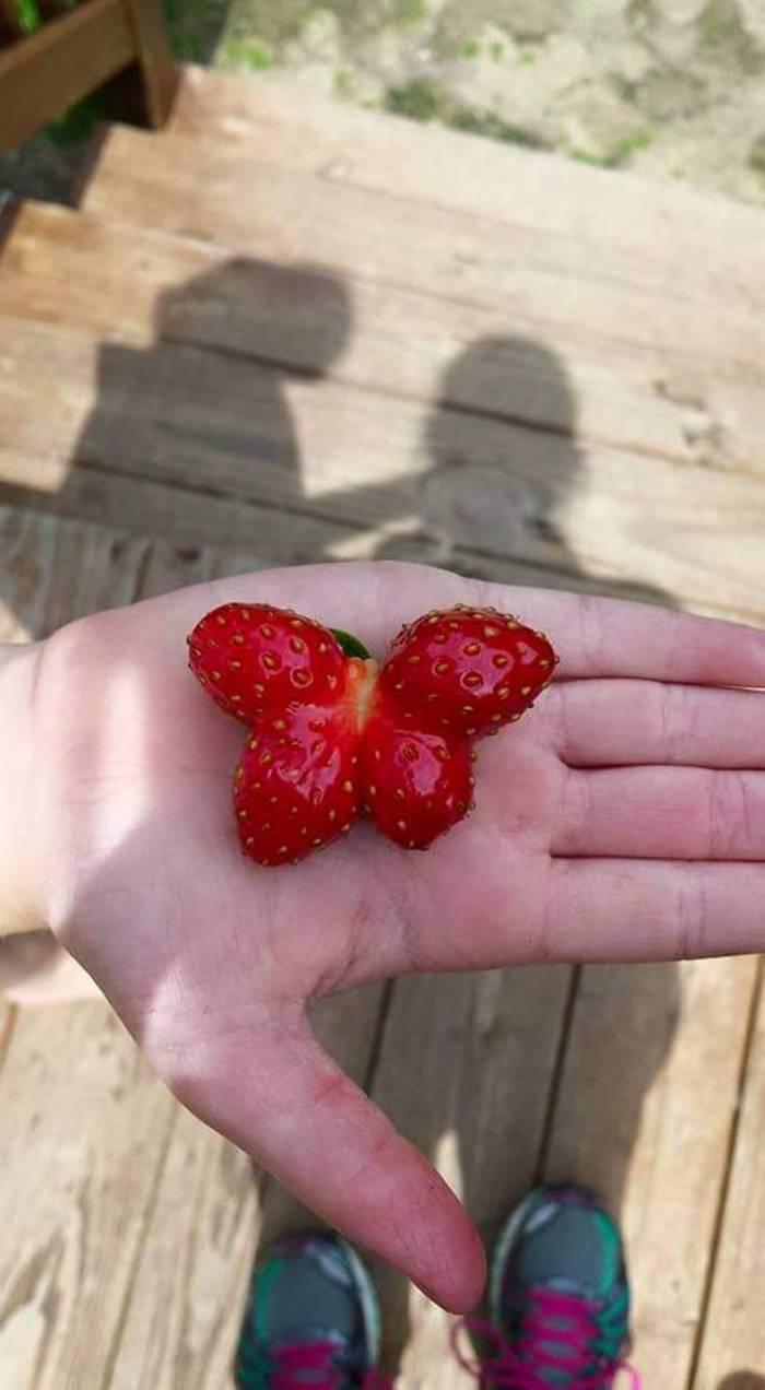 Butterfly Strawberry.jpg