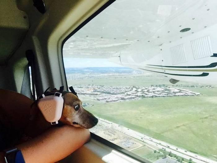 Flying Dog.jpg