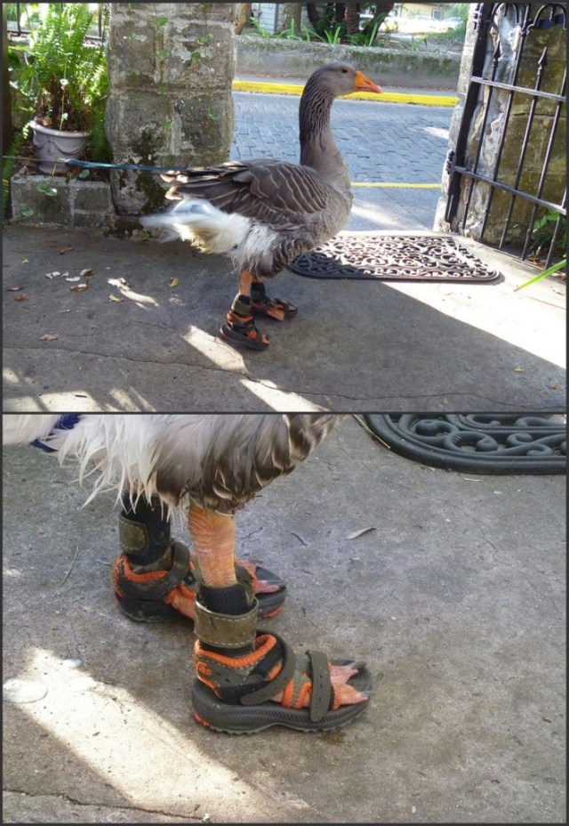 Duck Shoes.jpg