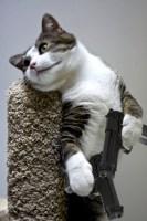Gun Cat.jpg
