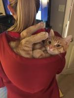 hoodie cat rider.jpg