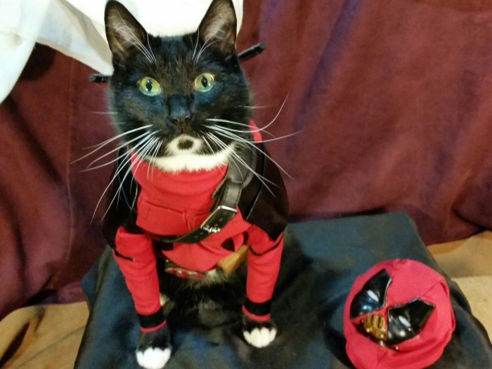 Catpool-Deadpool-Cosplay-003
