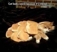 inbred cat.jpg