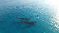 whales with paddle boarder.jpg