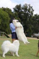 Fluffy Fuff.jpg